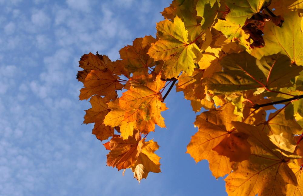 Herbstfarben in den letzten Sonnenstrahlen