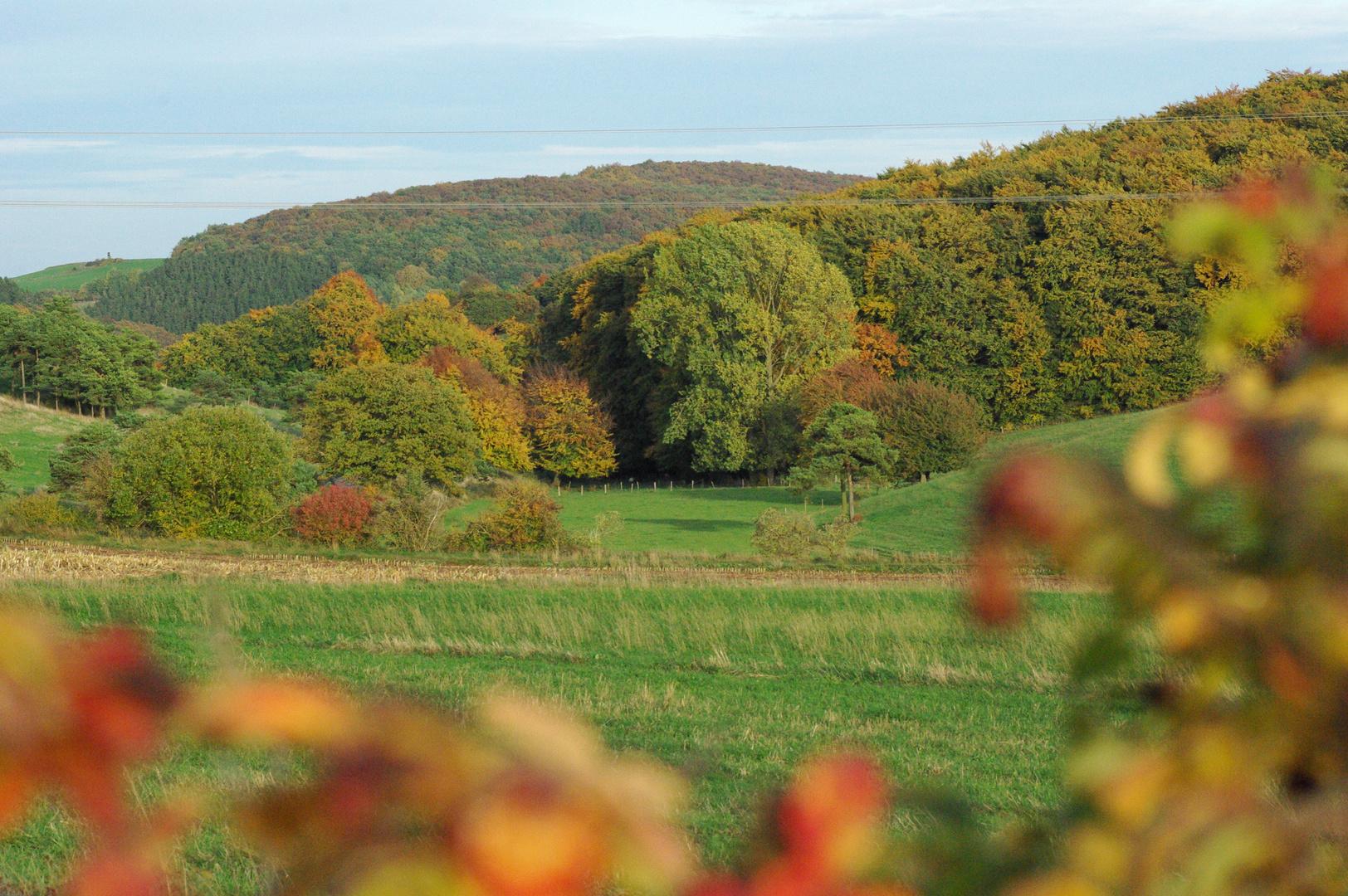 Herbstfarben in der Eifel