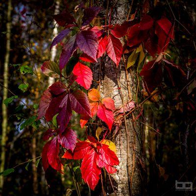 Herbstfarben in der letzten Spätsommersonne