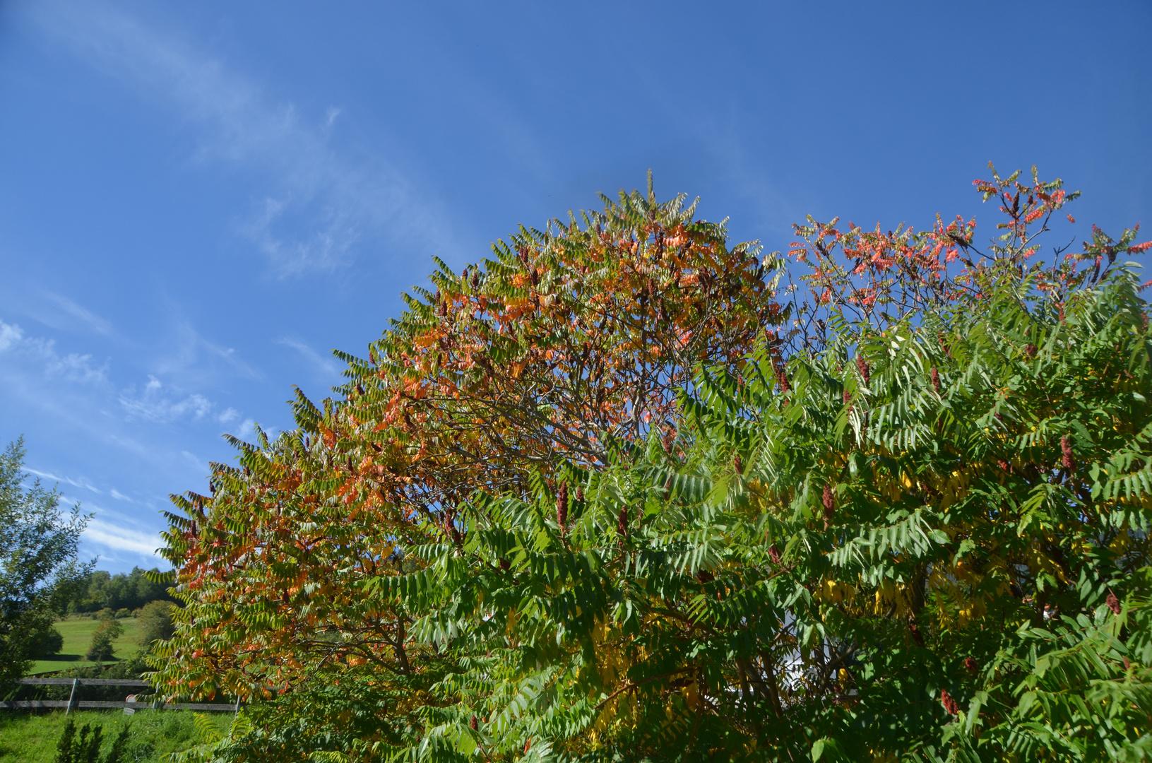 Herbstfarben in der Sonne
