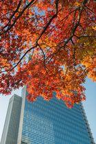 Herbstfarben in der Stadt