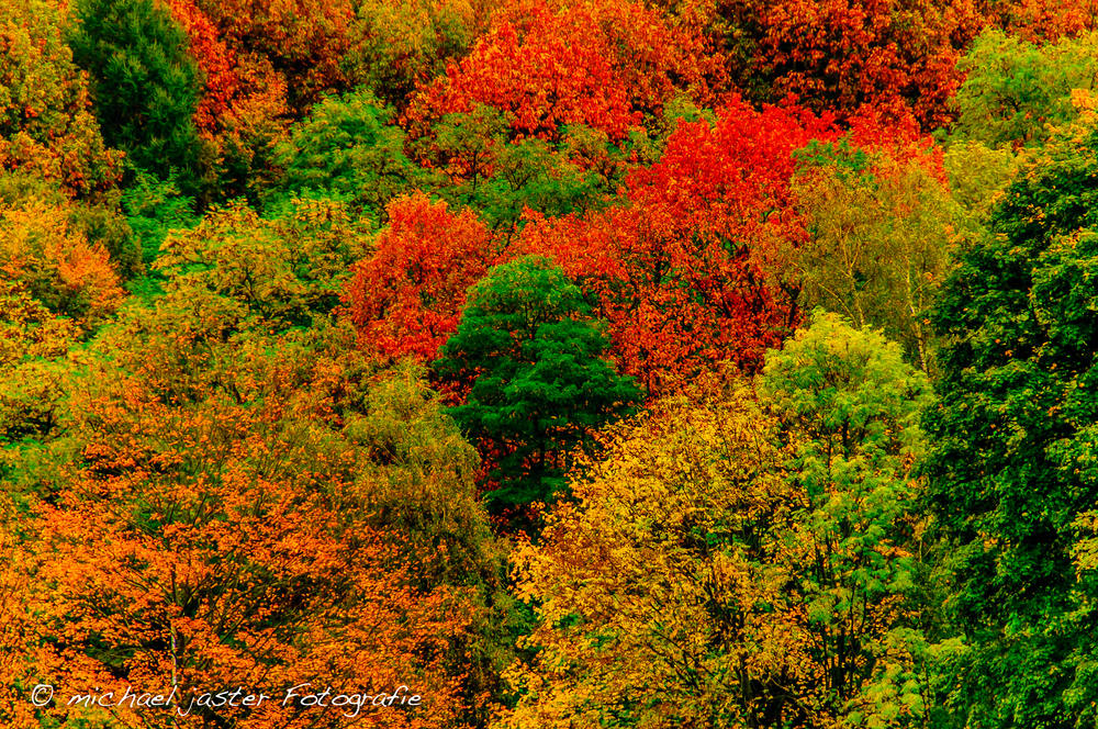Herbstfarben in Düsseldorf