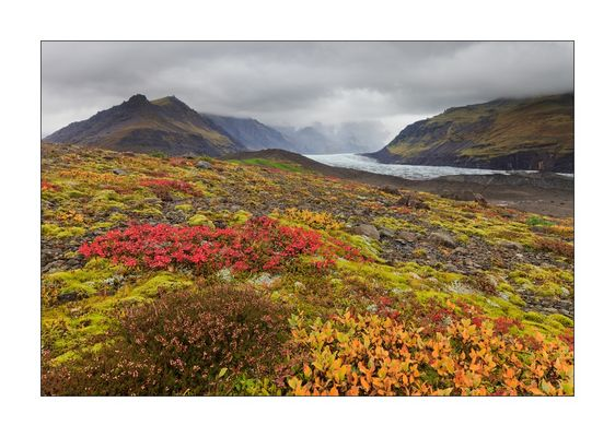 Herbstfarben in Island