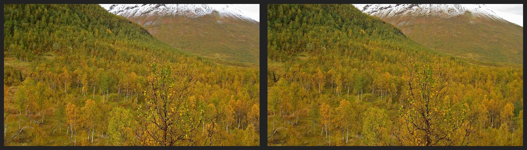 Herbstfarben in Norwegen (4)