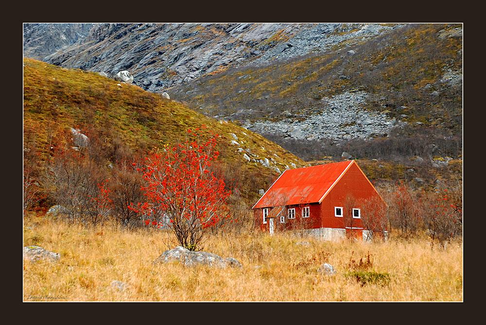 Herbstfarben in Norwegen