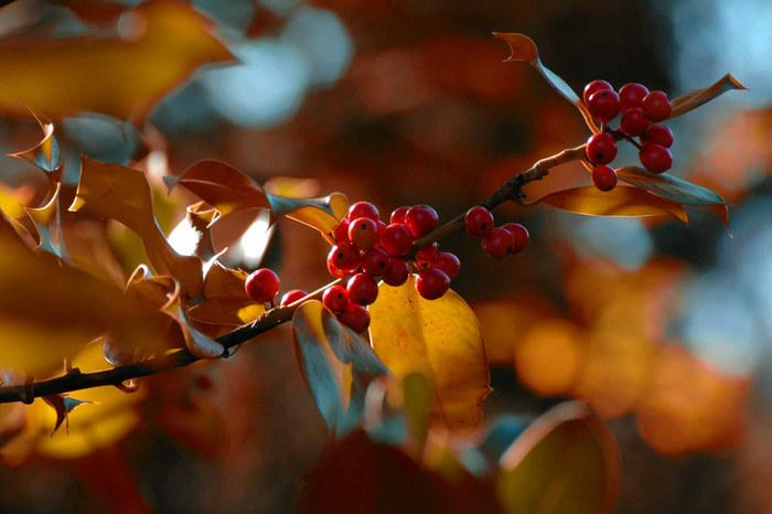 Herbstfarben in schoenster Form