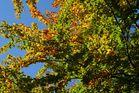 Herbstfarben Mitte Oktober