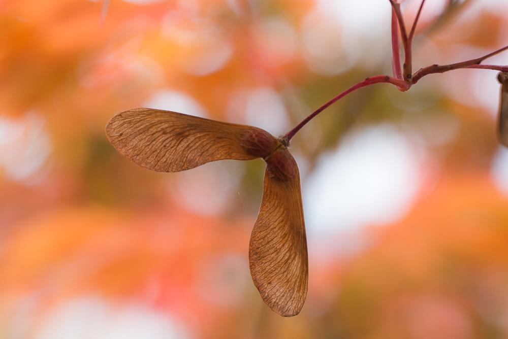 Herbstfarben Orange und Braun