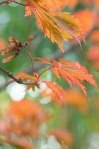 Herbstfarben Rot und Grün
