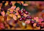 Herbstfarben V...........