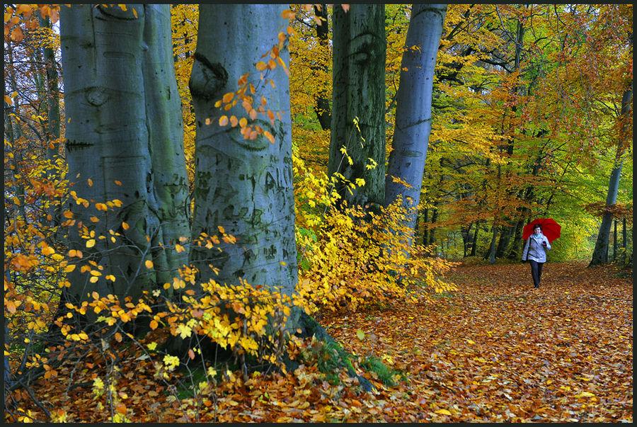 Herbstfarben VI
