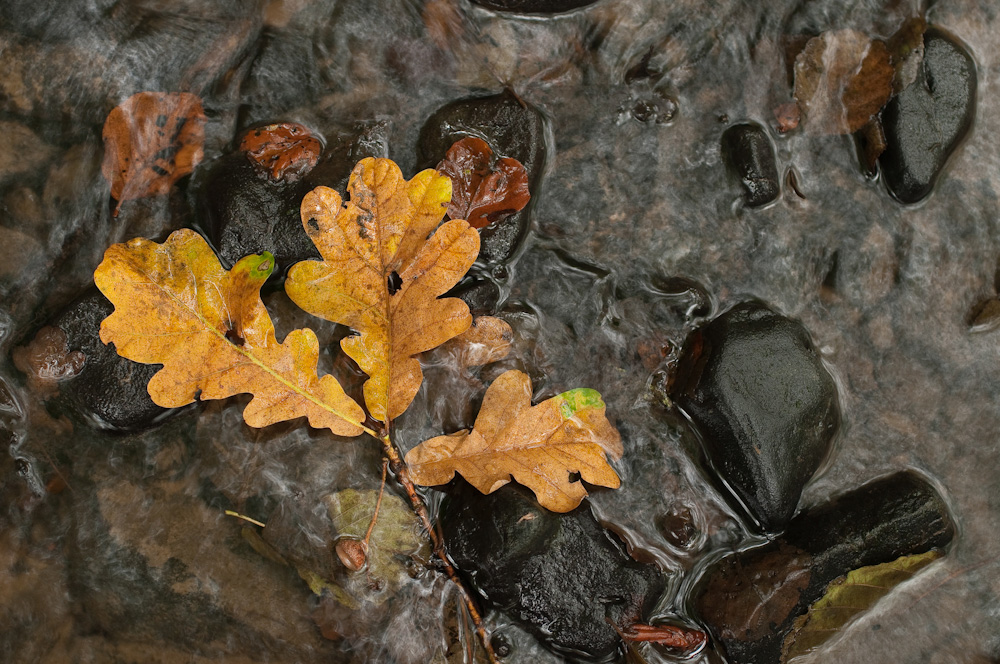 Herbstfarben_02