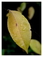 Herbstfarben~~02