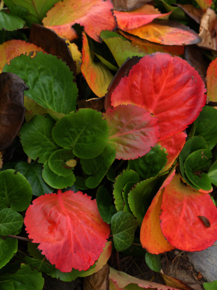 Herbstfarben_11