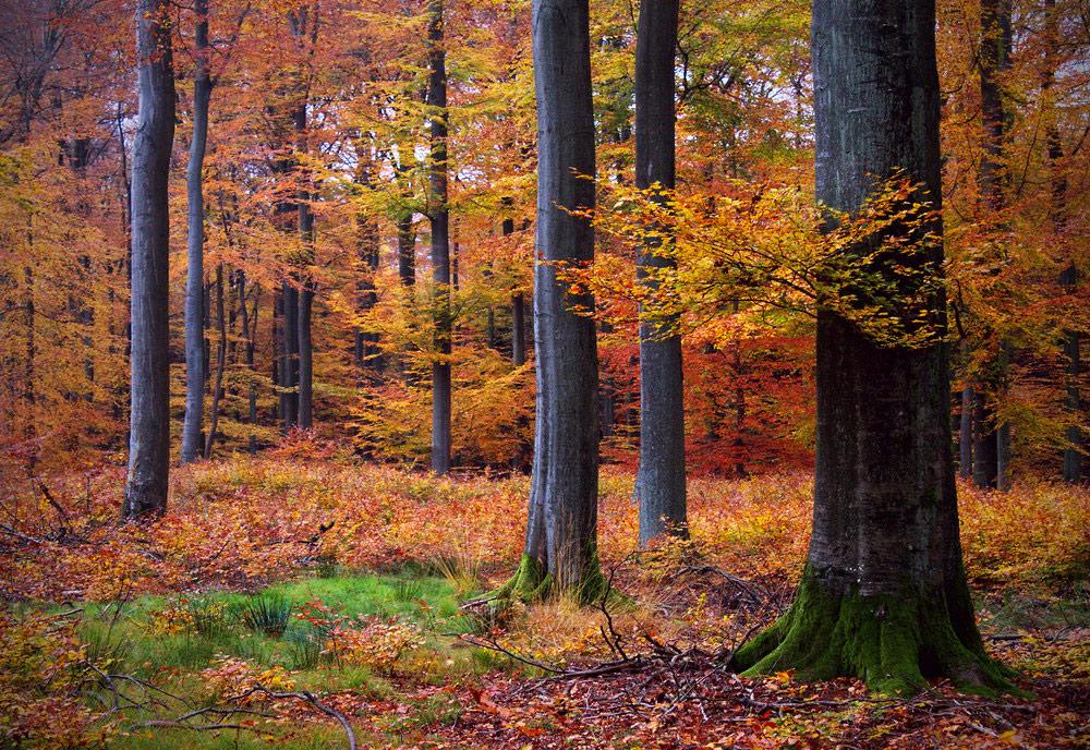 Herbstfarbenexplosion