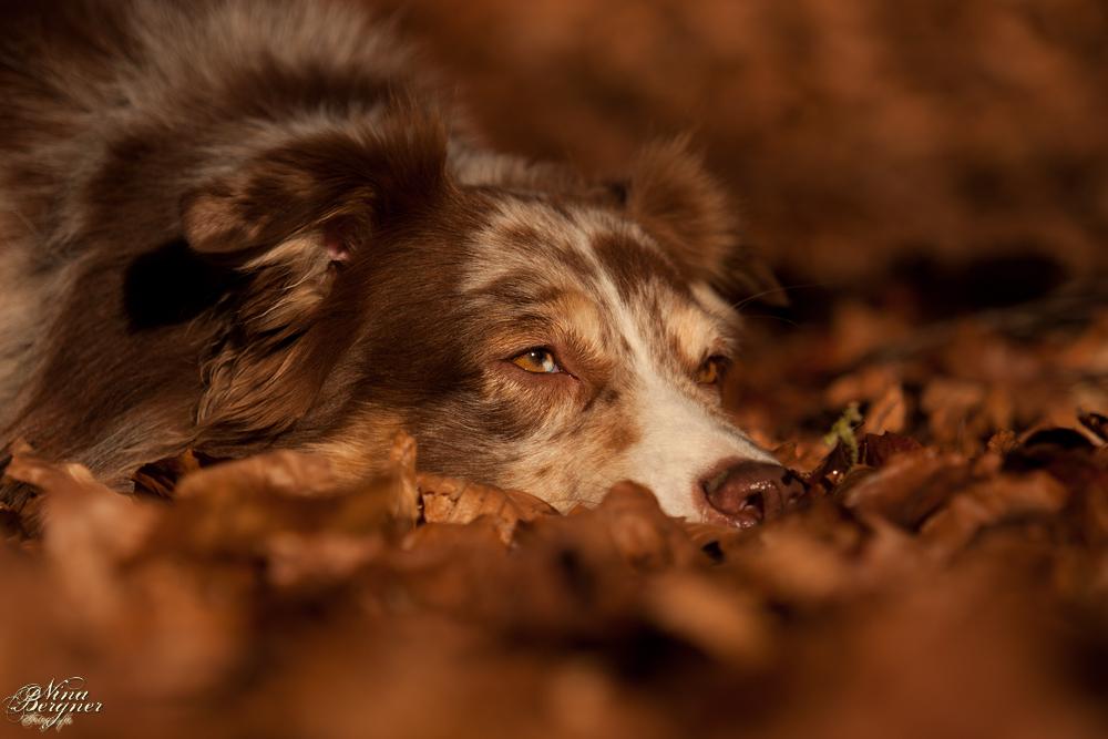 Herbstfarbenhund ;-)
