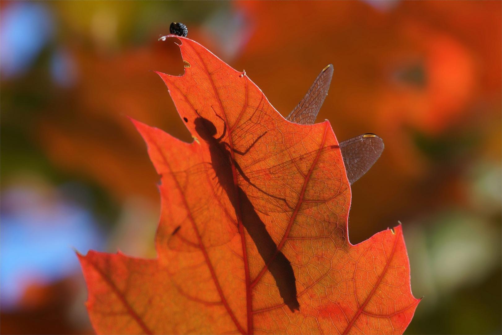Herbstfarbenrausch