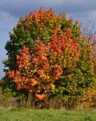 """Herbstfarbenspiel"""