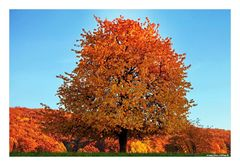 Herbstfarbflash