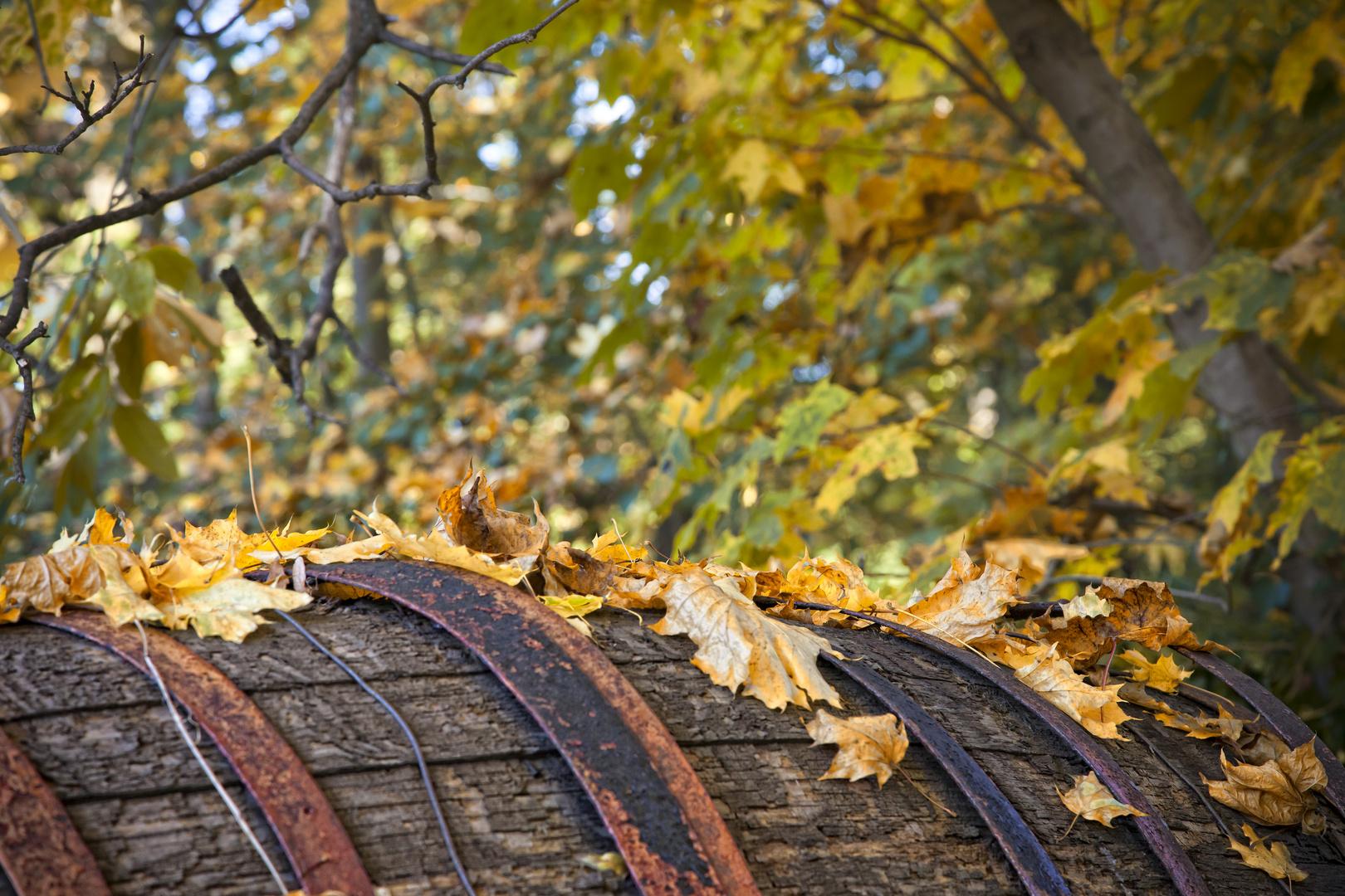 Herbstfass