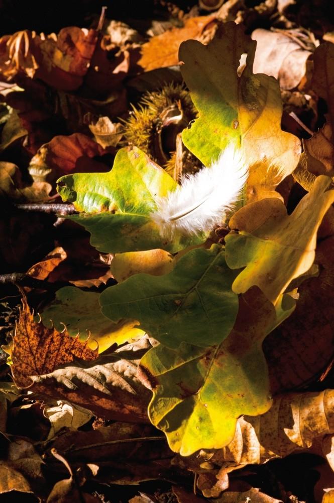 Herbstfeder
