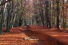 Herbstfeeling