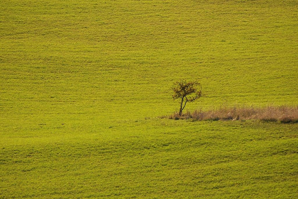 Herbstfeld