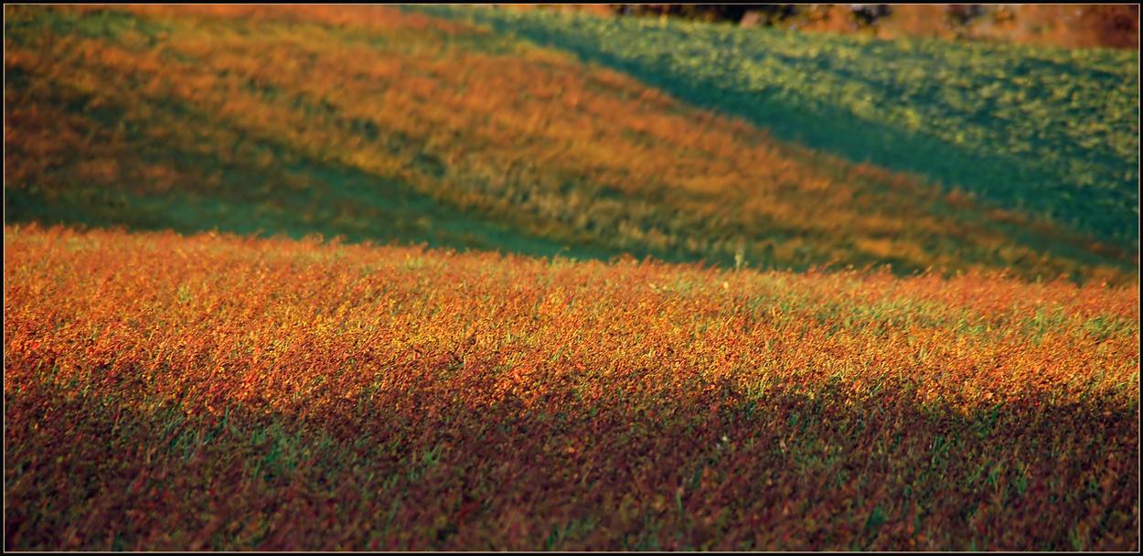 Herbstfelder *2