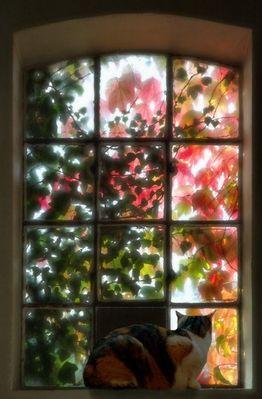 Herbstfenster mit Katze