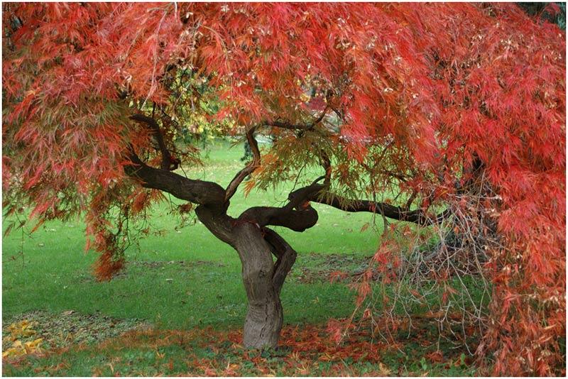 < Herbstfeuer >