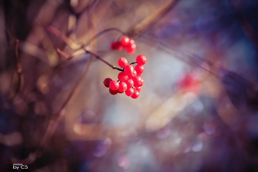 *** Herbstfeuer ... ***