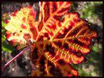 Herbstfeuer - ein Mitbringsel von der LANDPARTIE