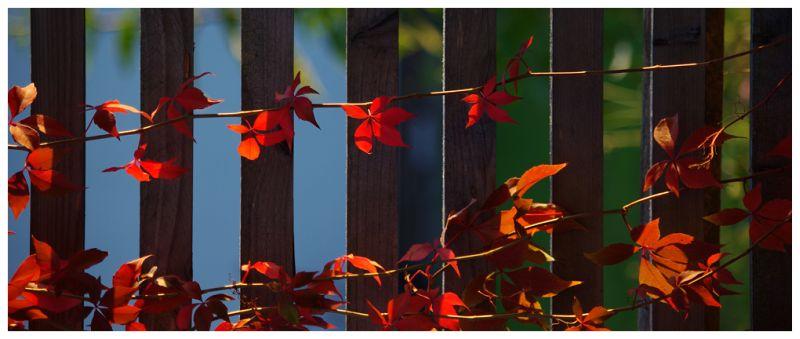 Herbstfeuer II
