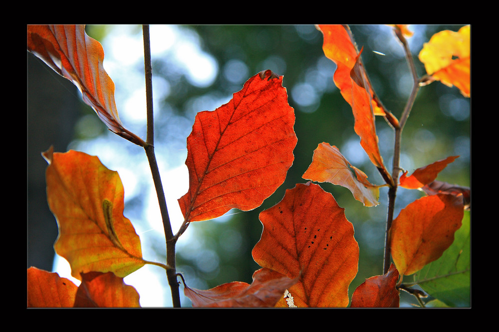 Herbstfeuer_I