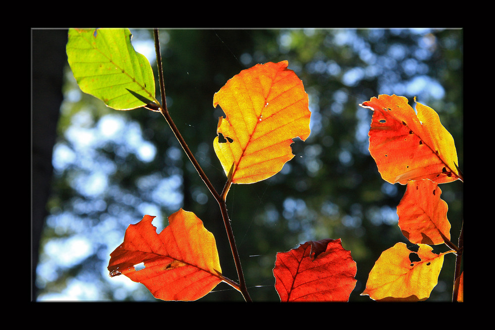 Herbstfeuer_II