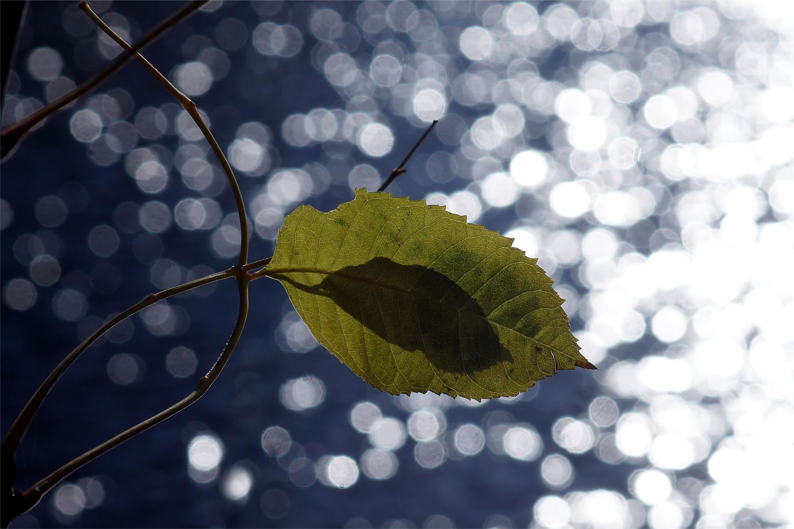 Herbstflackern