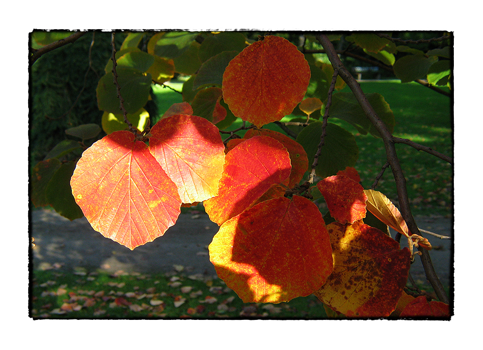 Herbstflair
