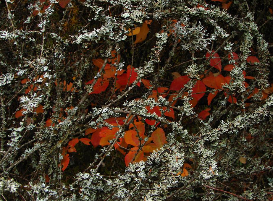 Herbstflechten