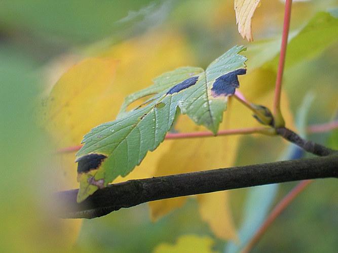 Herbstflecken