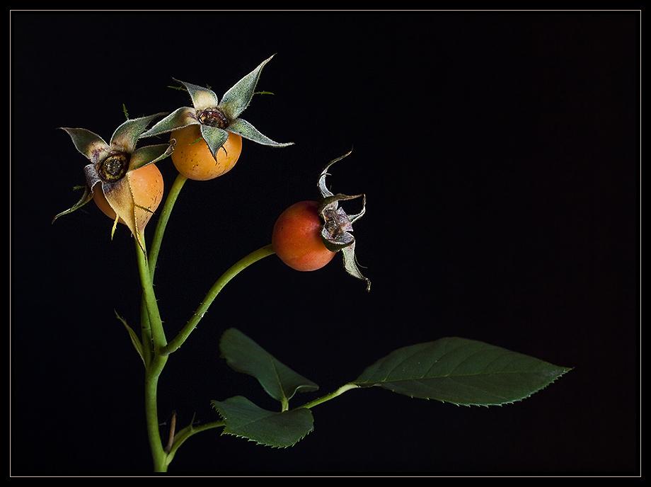 Herbstfrucht (2)