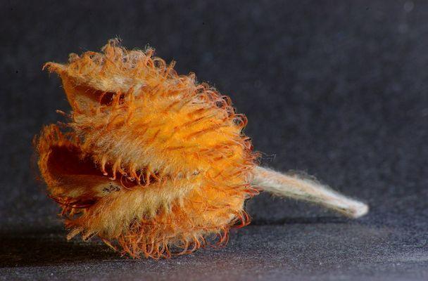Herbstfrucht Makro HDR