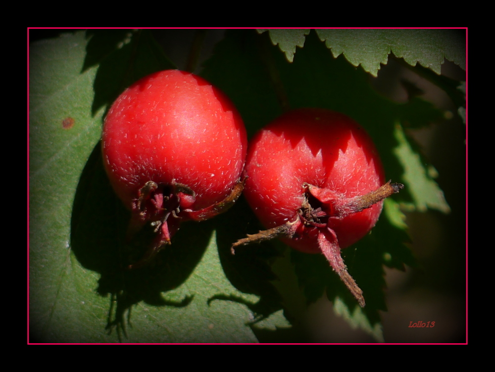 Herbstfrüchte ...