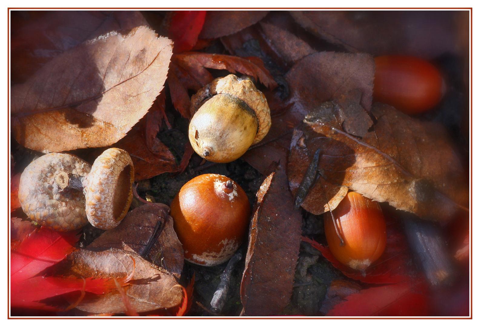 Herbstfrüchte...