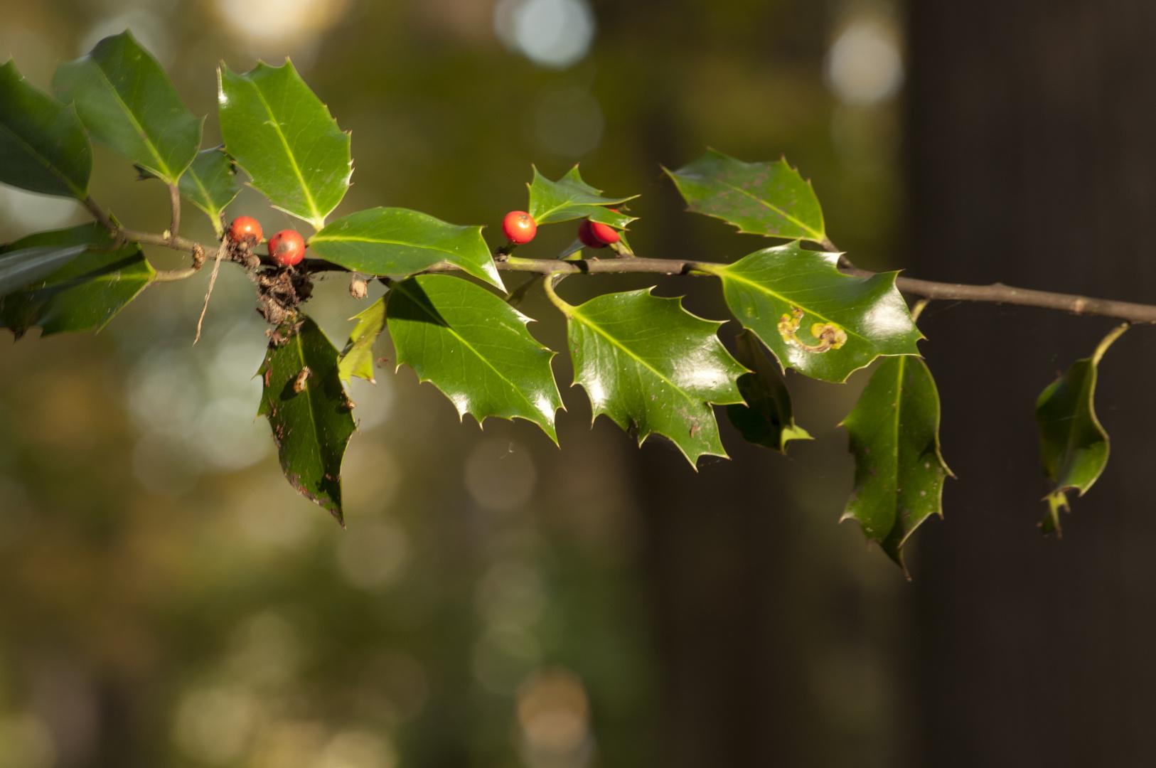 Herbstfrüchte!