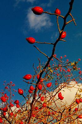 Herbstfrüchte in der Sonne