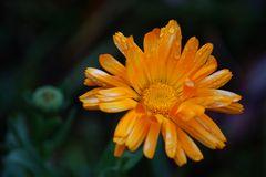 Herbstfund