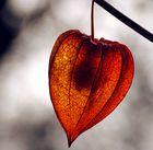Herbstfund im Garten