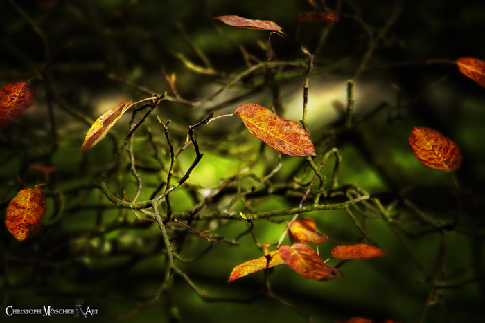 Herbstgedanken - autumn thoughts
