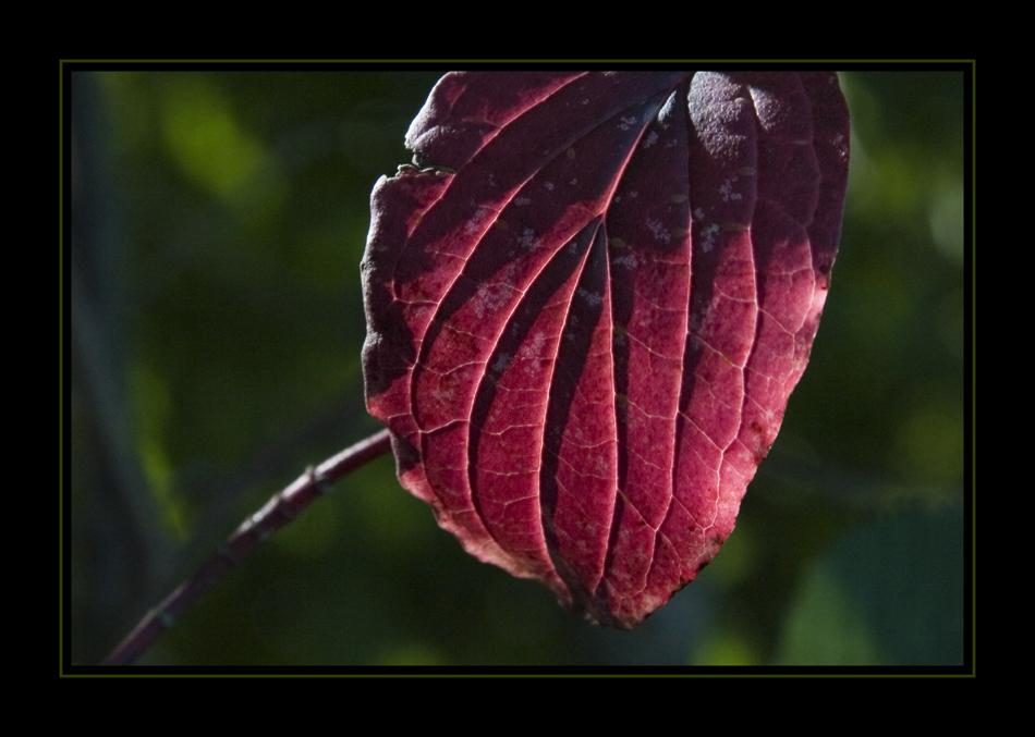 Herbstgedanken XXXV
