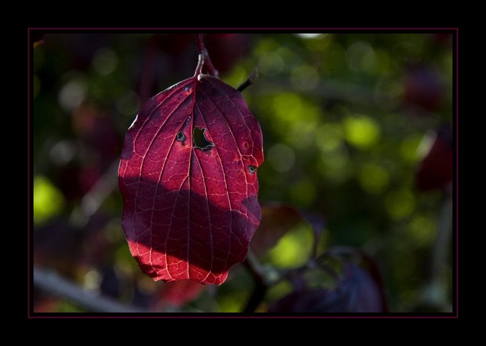 Herbstgedanken XXXVII